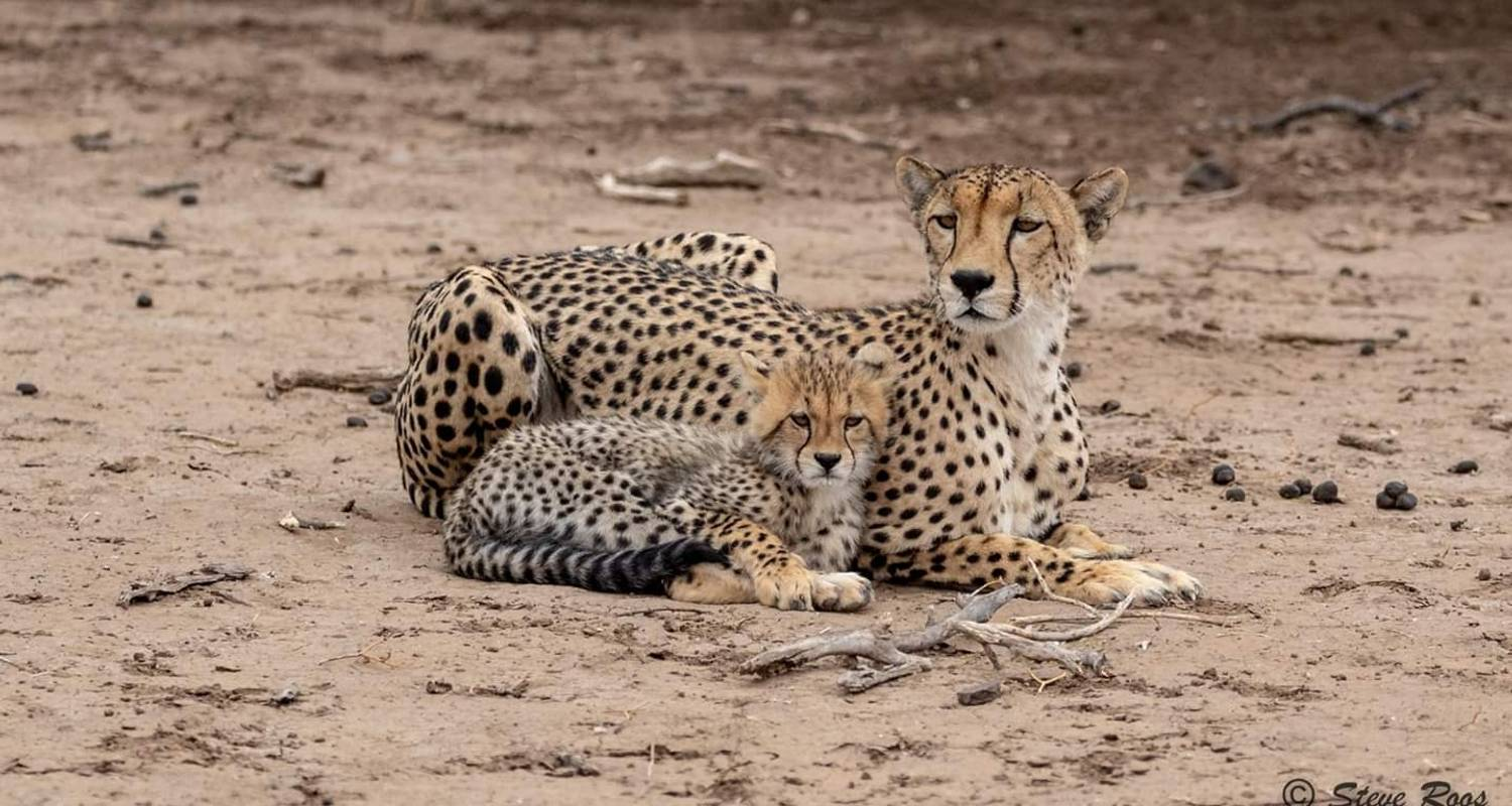 7 Days, 6 Nights Tarangire,Serengeti, Ngorongoro Crater  & Manyara  Budget Camping Safari Tour Tanzania  -  Travel Africa Safari Agency