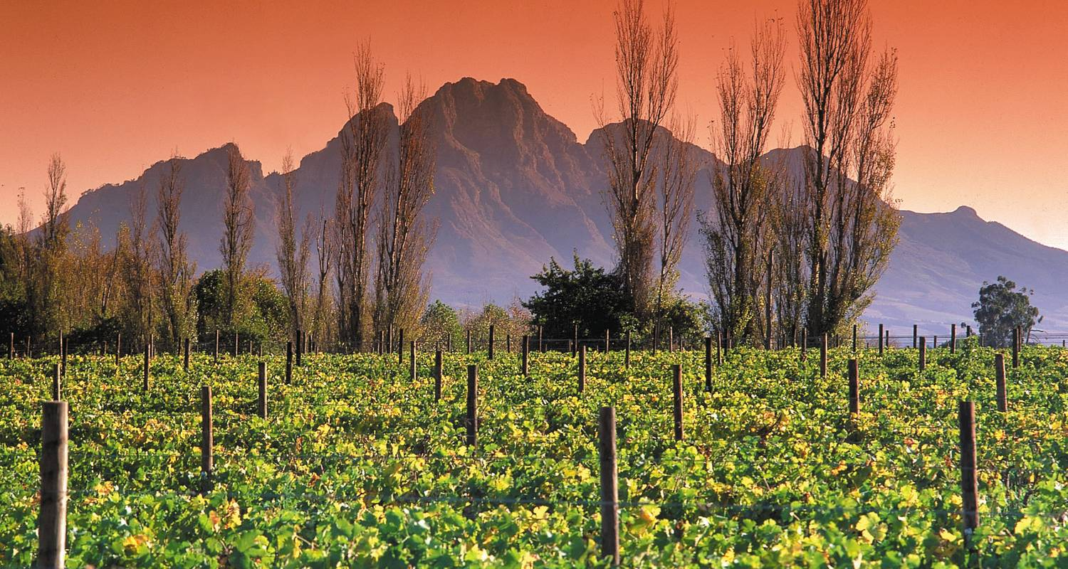 Cape Winelands and the Garden Route for Wine Lovers - 5 Days - Explore South Africa