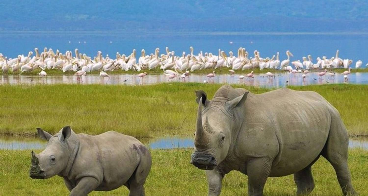 7 Day Masaai Mara, Lake Nakuru, Lake Naivasha and Hells gate Safari from Nairobi - Perfect Safari Africa tours and safaris