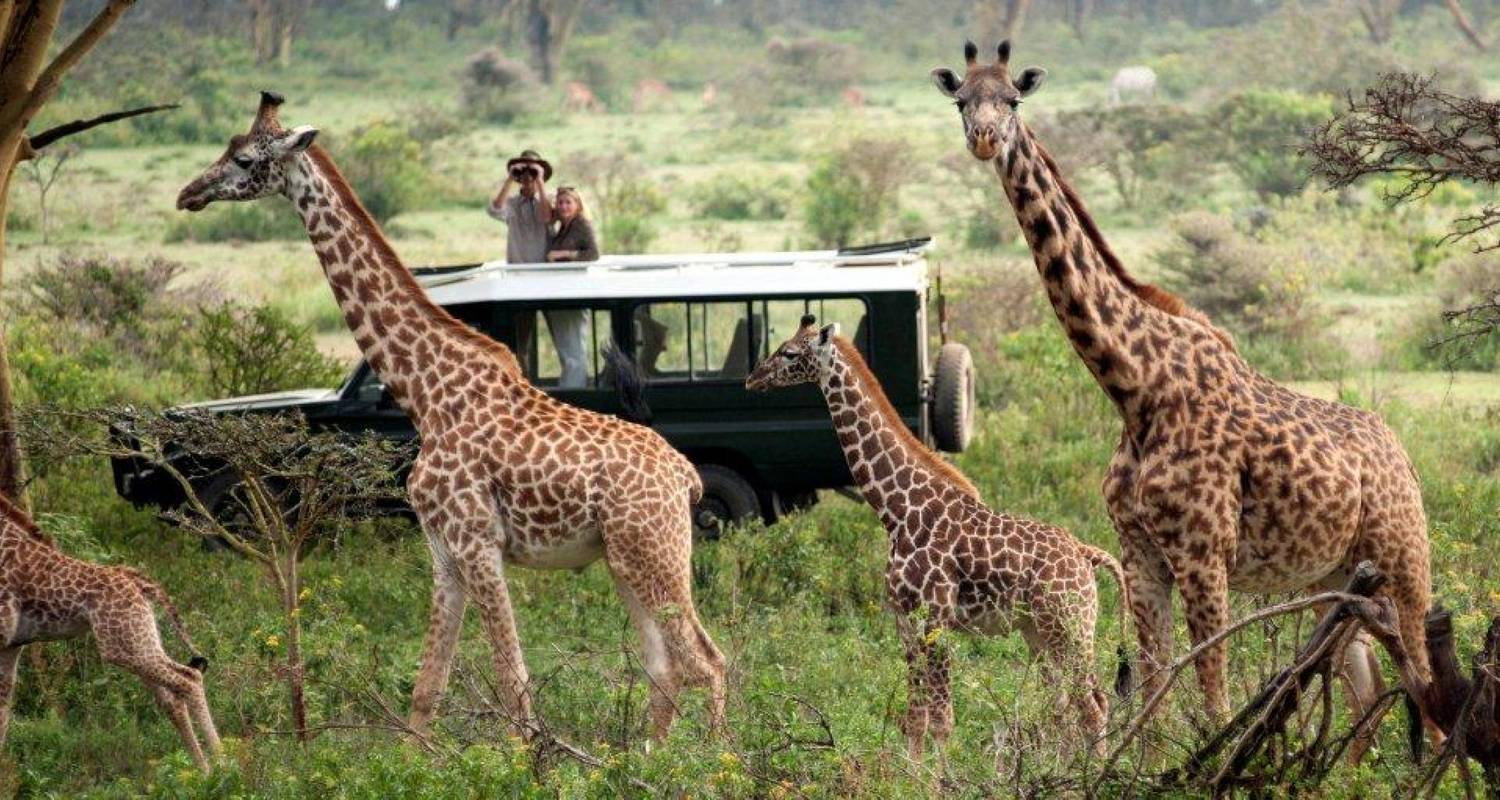 8 Days Masai Mara Wildebeest Migration Package - Steppe Dogs Adventures Ltd