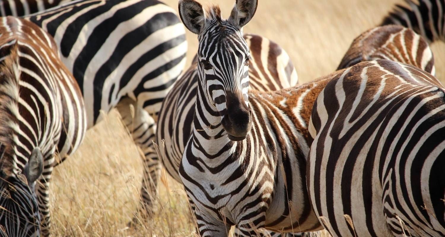 5 Days Masai Mara & Lake Nakuru SOPA LODGE SAFARI - Bonvoyage Kenya Safaris