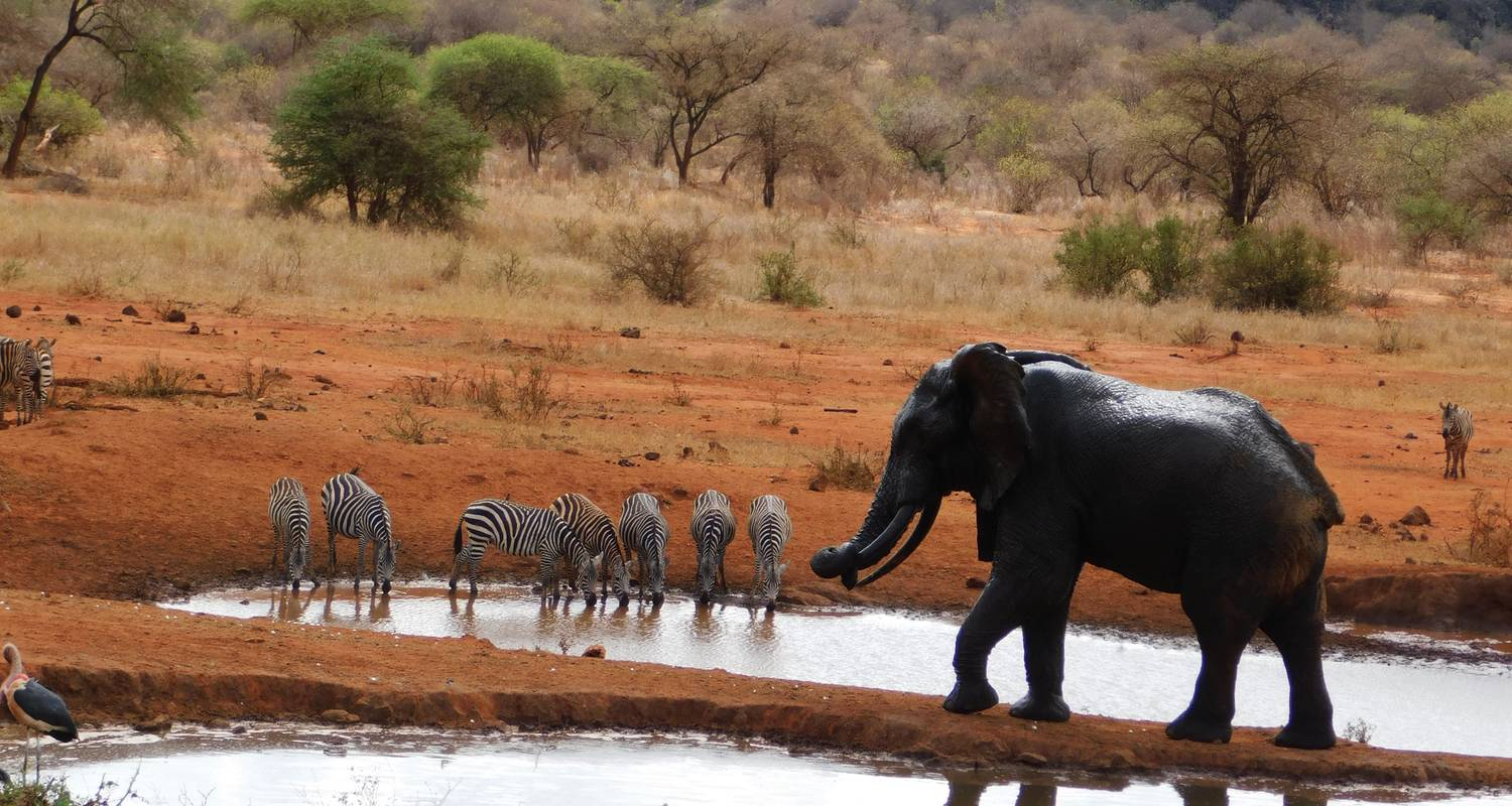 Kenia Safari - 7 Tage  - Africa Vacation Safaris