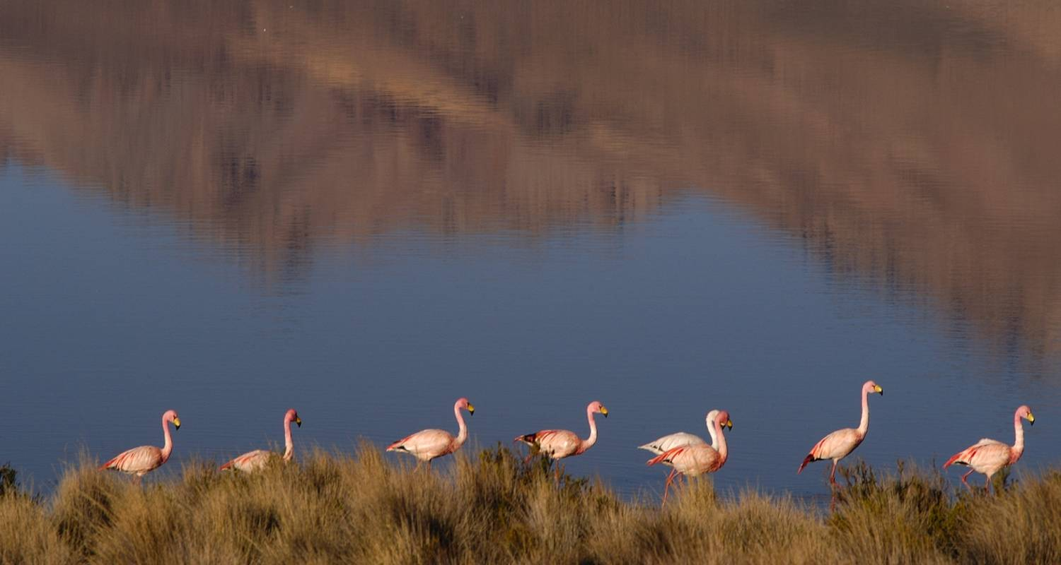 5 Days Unique Experience @ Chilean high Plateau (Chilean Altiplano) - Signature Tours