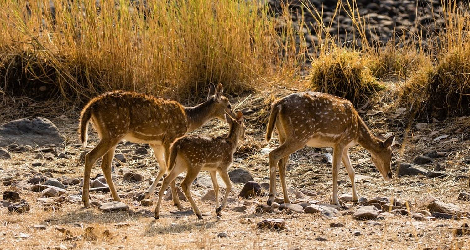 Jaipur Ranthambore - Asiago Travels