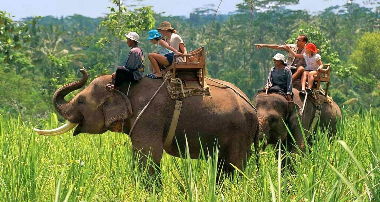 Exclusive Tour of Wildlife in India   - Trip India Hotels and Holidays