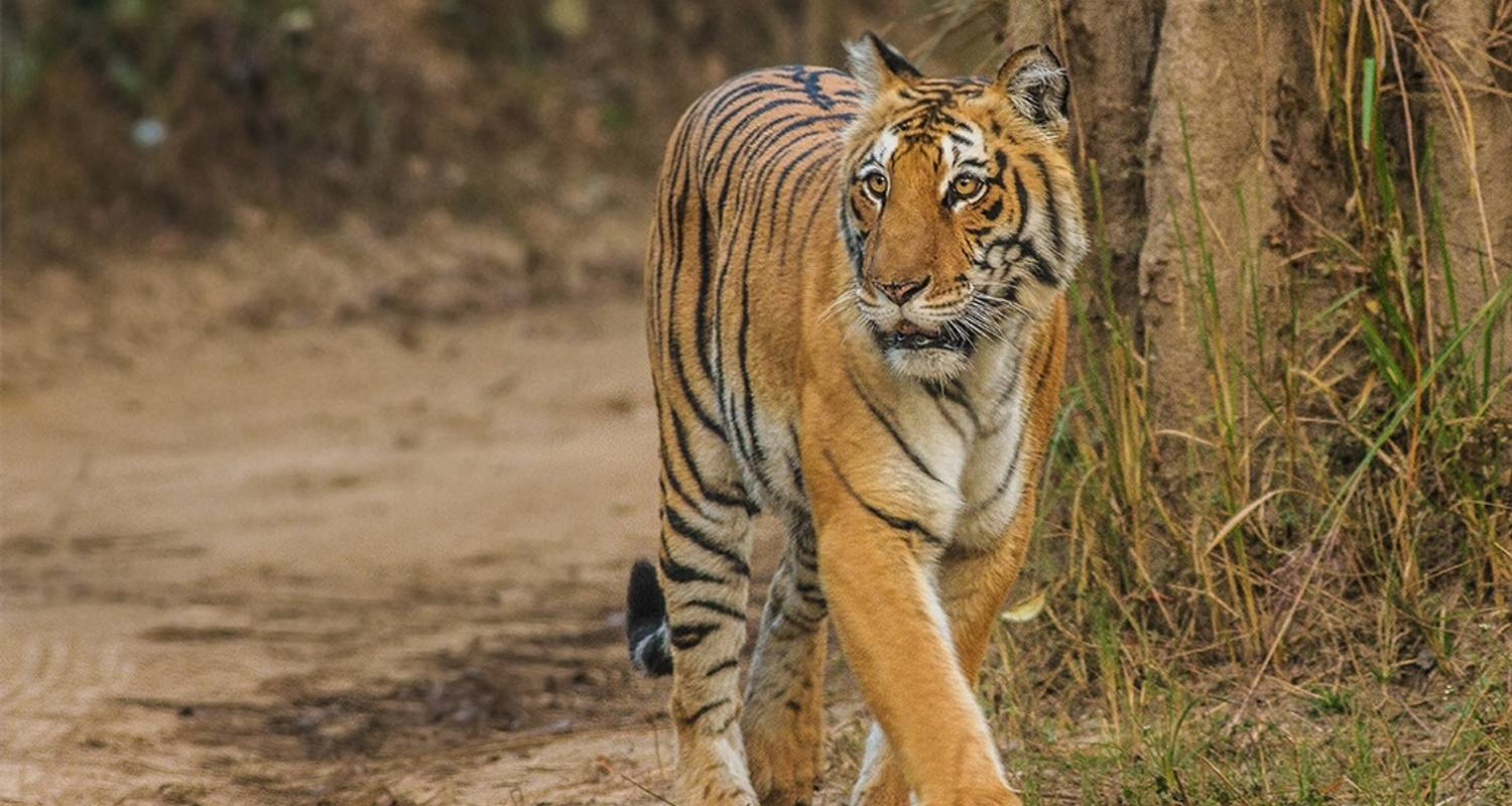 Golden Triangle Tour With Ranthambore Tiger Safari Tour - Dreamz Tours & Travels