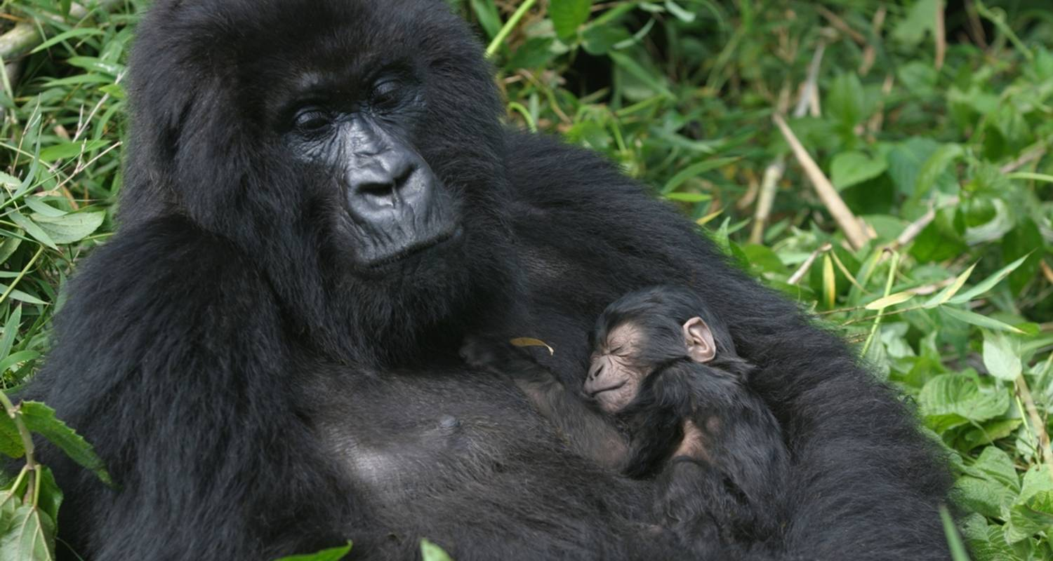 Gorillas & East Africa Safari - Intrepid Travel