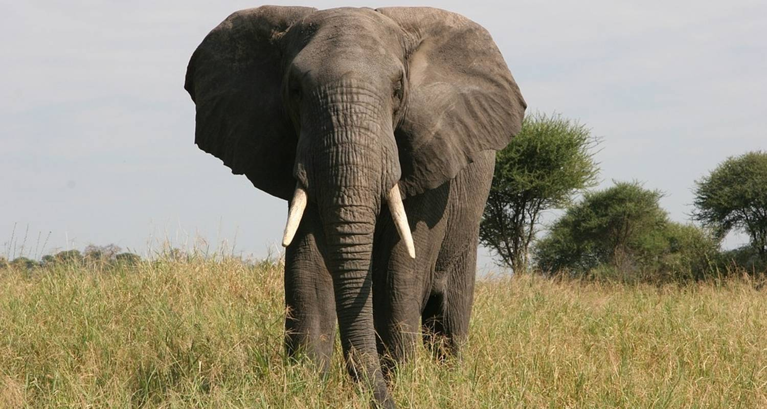 5 Days Camping Safari Tour Tanzania - Serengeti African Tours