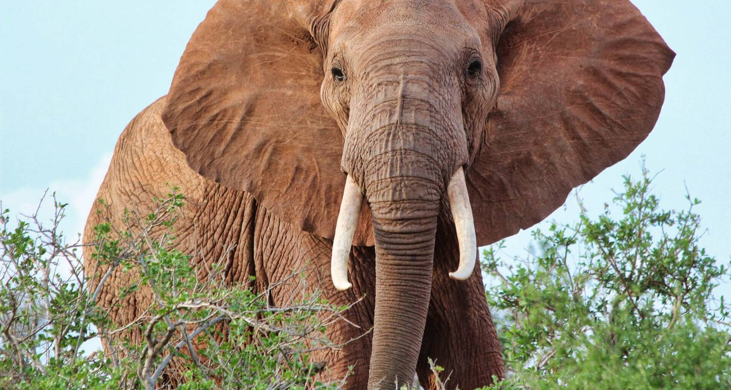 3 days safari Tsavo East  and Amboseli - KT Safaris