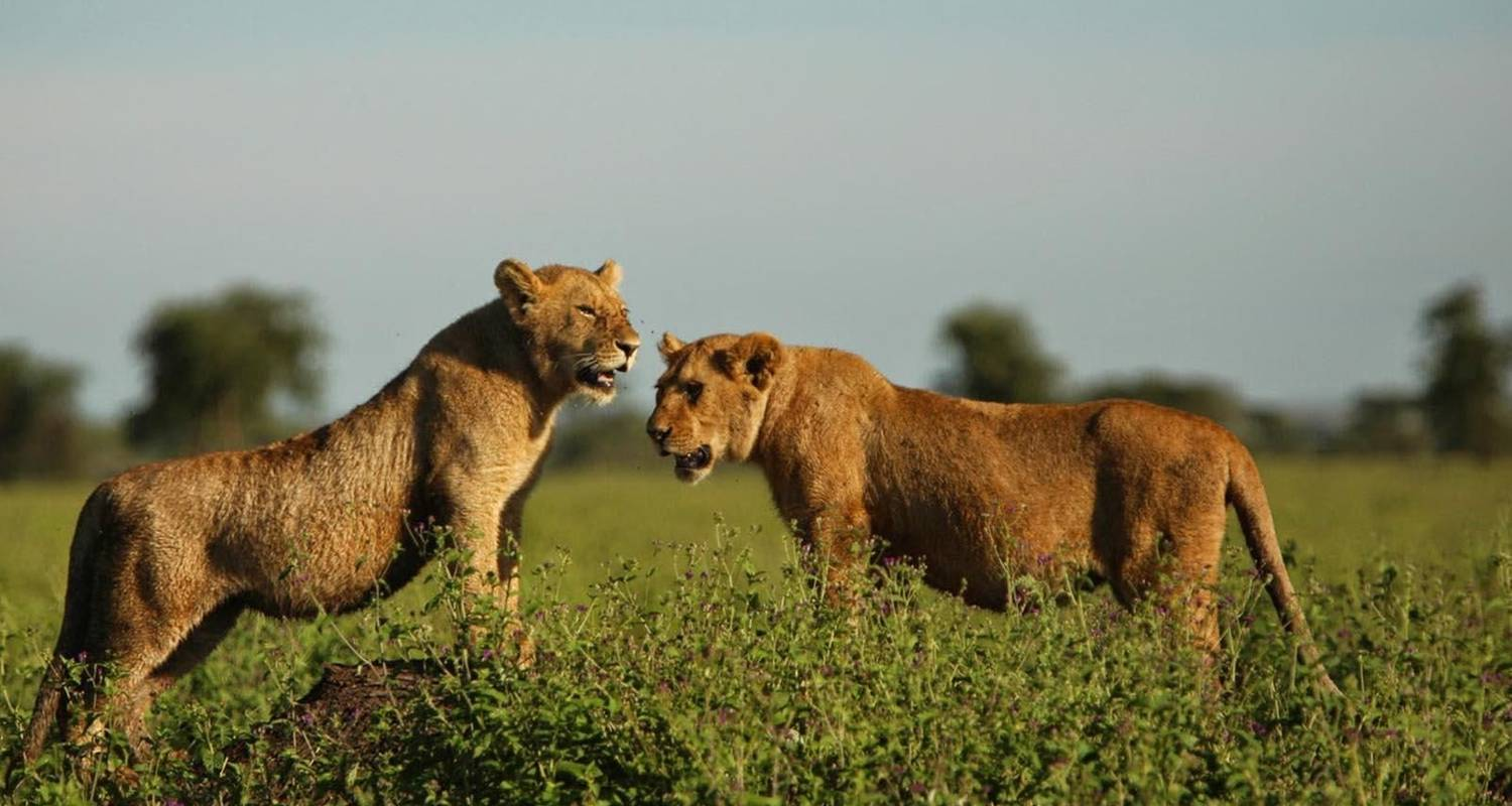 3 Days Safari in Serengeti and Ngorongoro - Safari Serengeti Booking