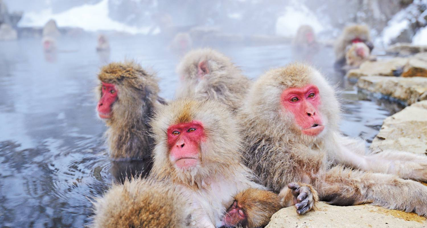 Allure of Japan with Snow Monkeys 2020/2021 - Scenic Luxury Cruises & Tours