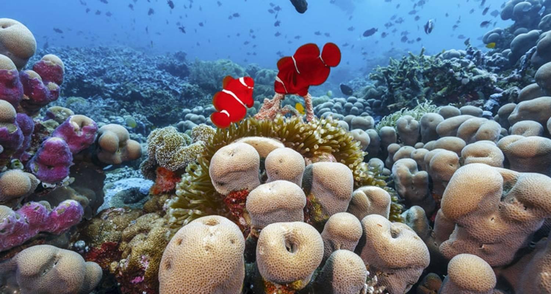 3 Days Private Wakatobi Diving And Island Tour All Inclusive By Wandernesia Code 92029p442 Tourradar