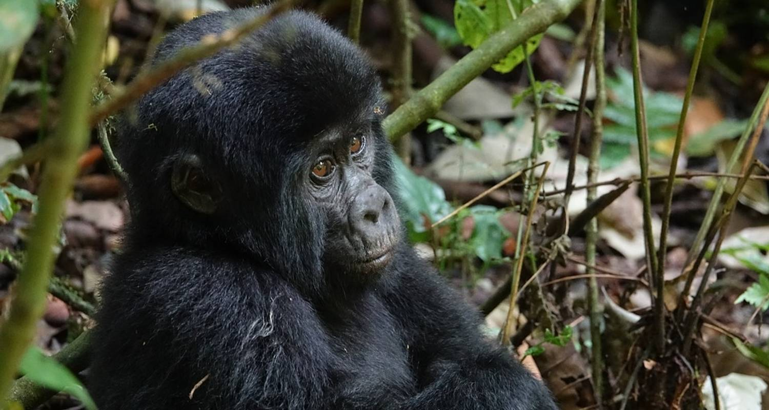 Game Parks and Gorillas 28 Days - Acacia Adventure Holidays