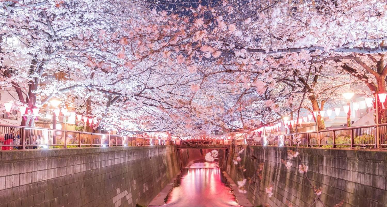 Japan Kirschblüte 2021