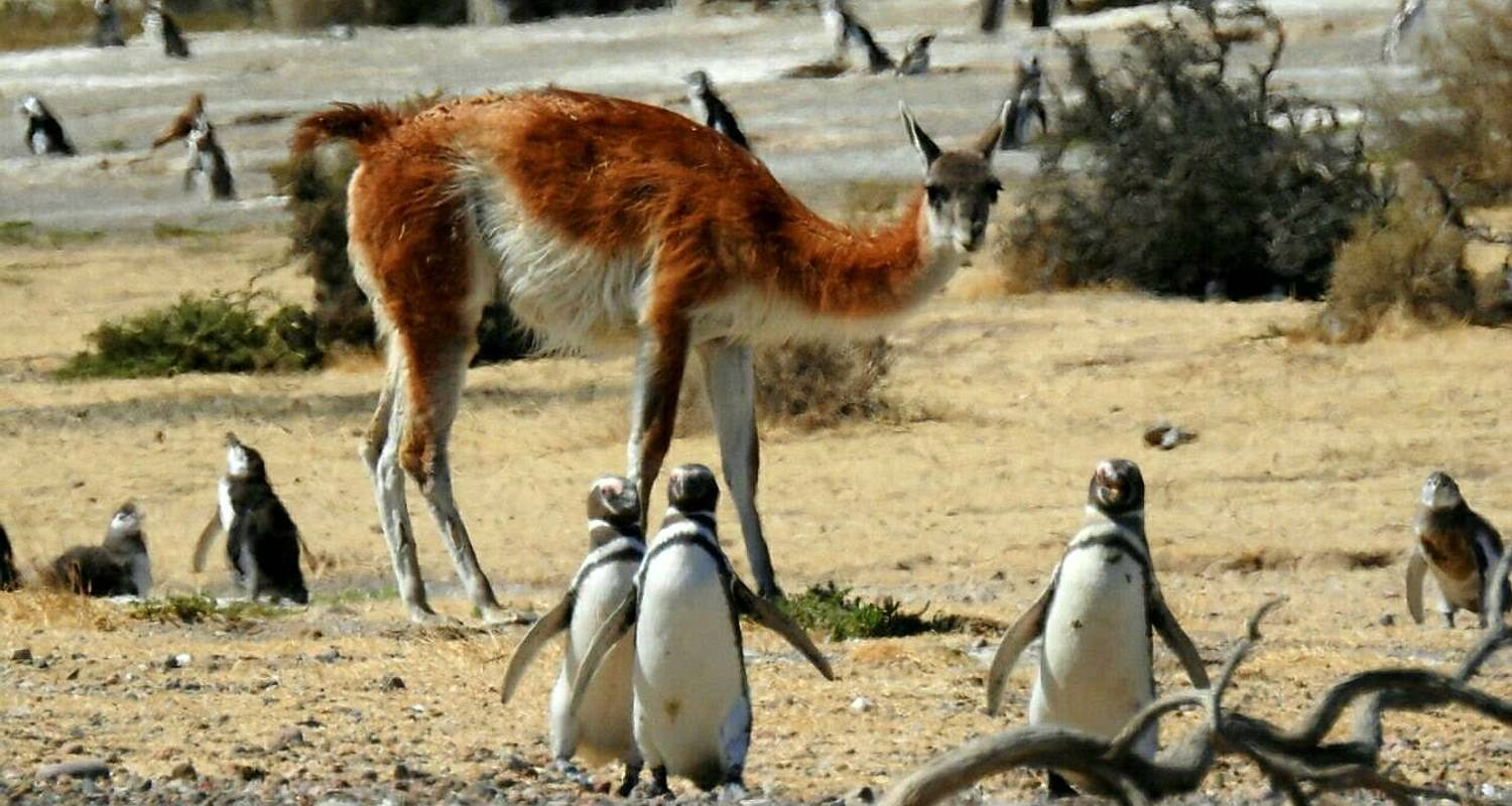 Best of Puerto Madryn & Punta Tombo National Reserve Tour - 4 Tage - Click Tours