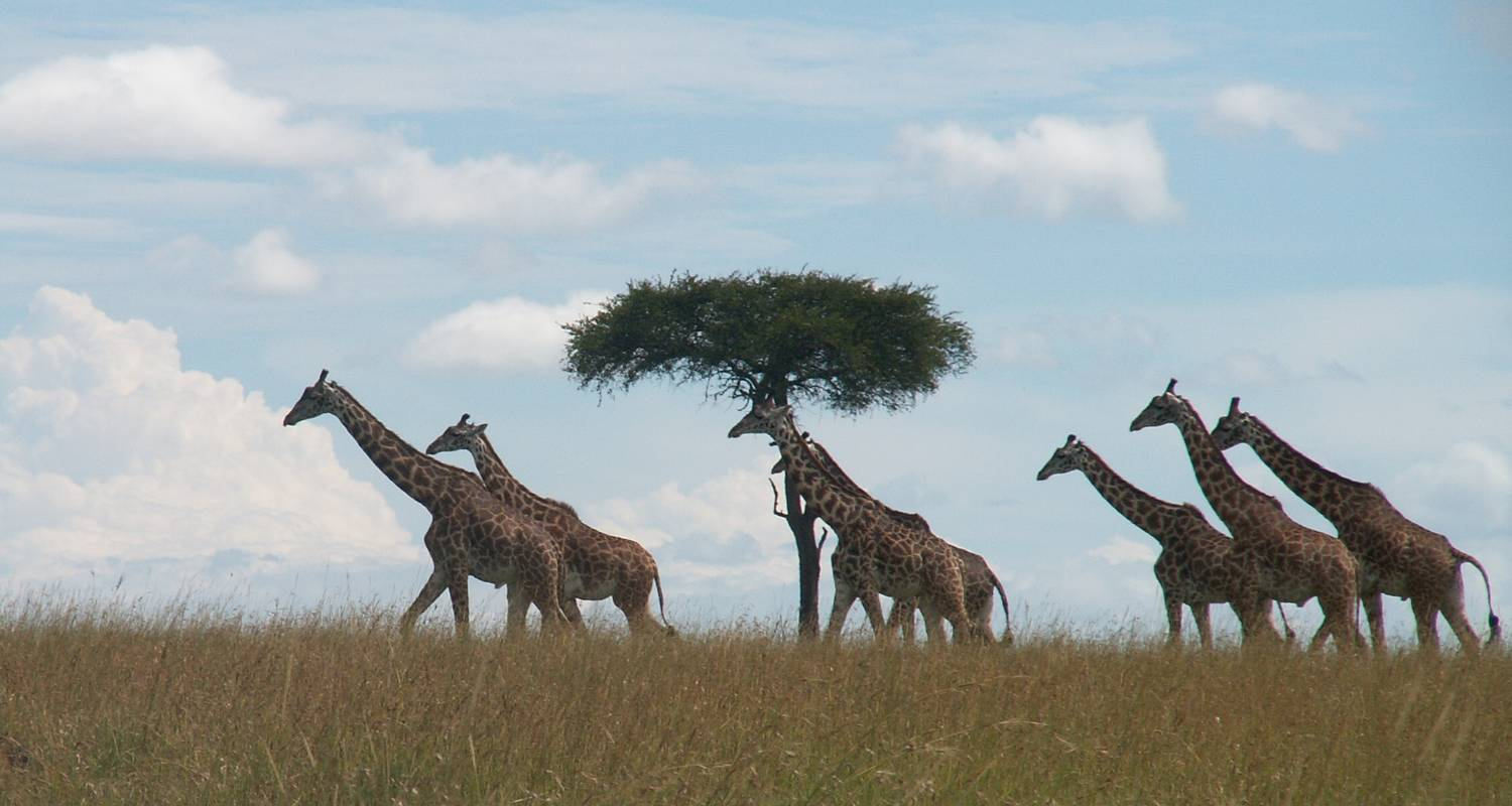 11 Days Great Kenya Safari - Arlom Kenya Safaris