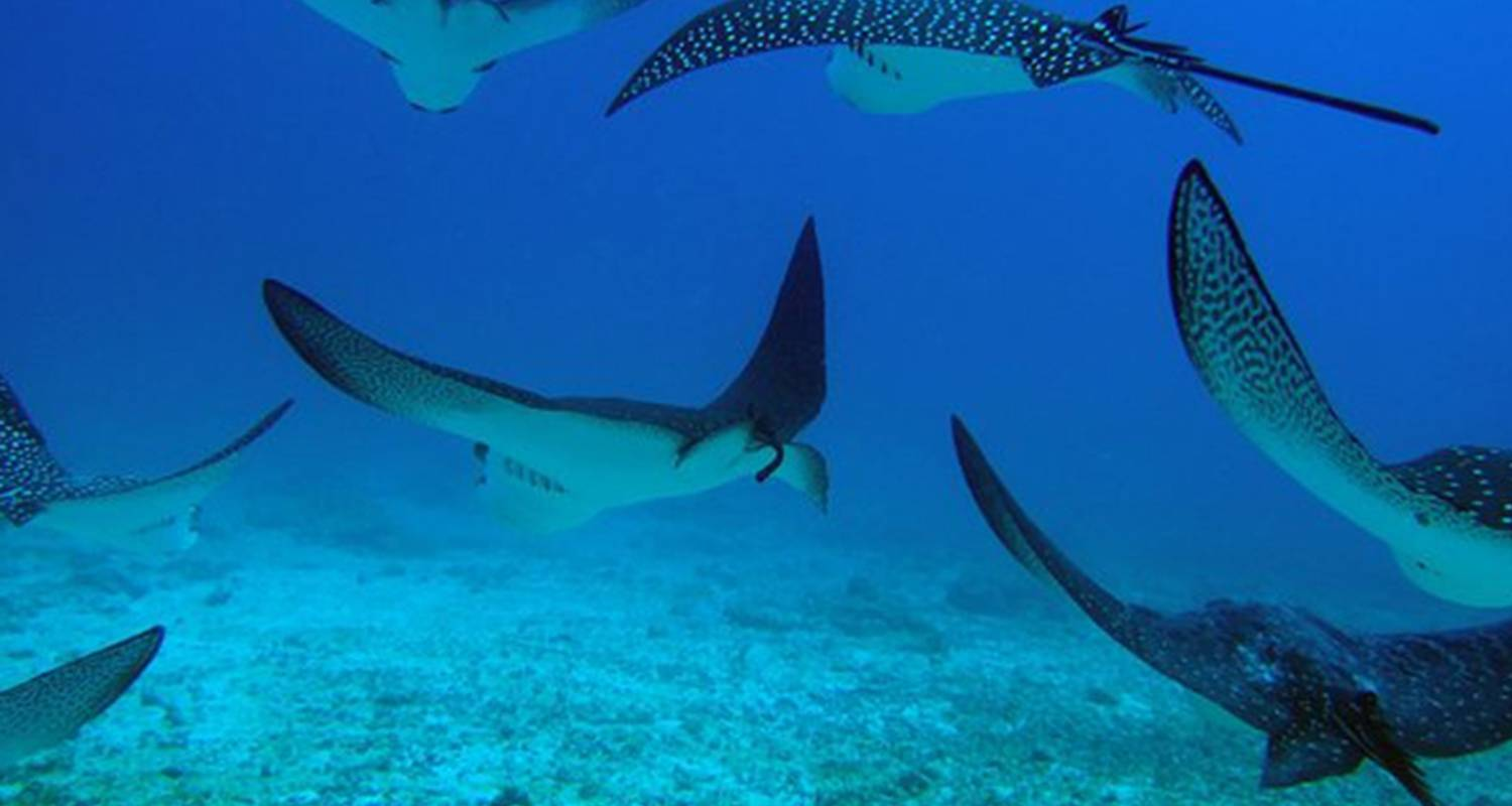 5-Day Galapagos Diving Tour: Accommodation and Full-Day Diving Excursions - Nature Galapagos & Ecuador