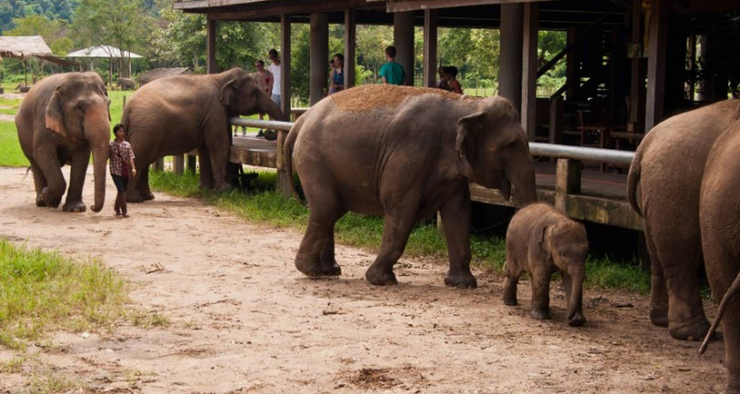 Chiang Mai & Elephant Conservation 3D/2N - Bamba