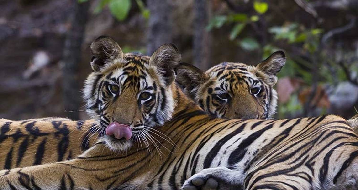 Indien Tiger Safari - Exodus Travels