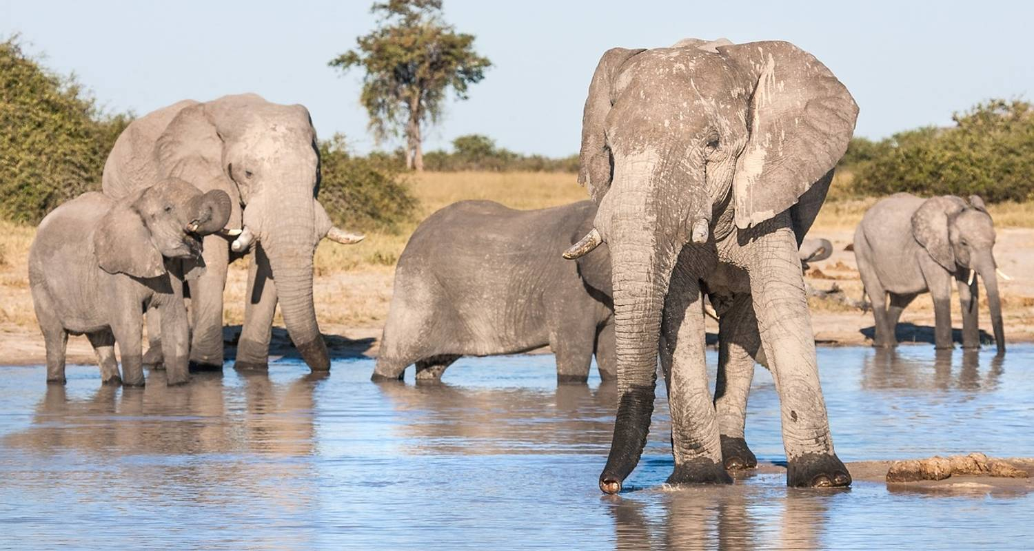 Jewels of Africa with Chobe National Park Area & Kruger National Park Area - Monograms