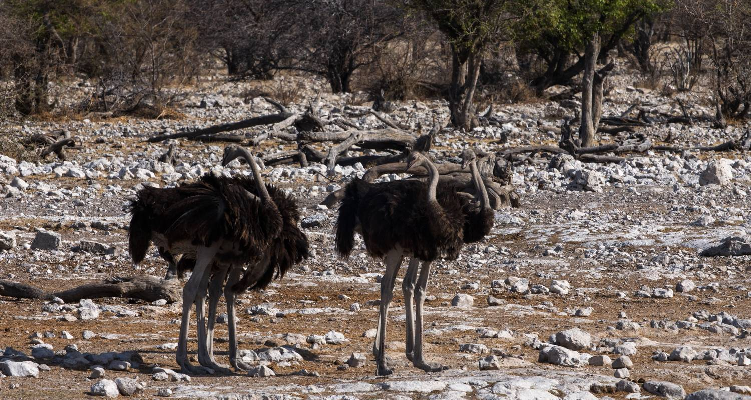 3 Day Etosha Accommodated - Wild Dog Safaris
