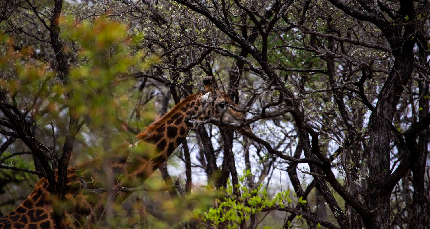 Kruger Safari and the Panorama Route - 6 Days - Expat Explore Travel