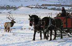 Winter in Yellowstone (7 destinations) Tour