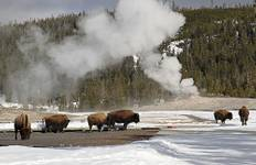 Winter in Yellowstone (9 destinations) Tour