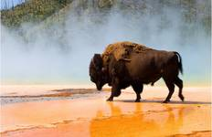 Yellowstone Wildlife Trails - Camping departure Tour