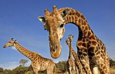 5 Day Murchison Falls National Park Safari Tour