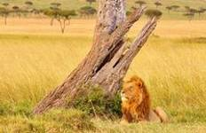 Kenya Beach Safaris Tour