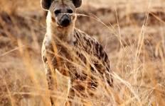 Tanzania Lodge Safari Tour