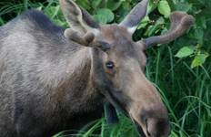 Alaskan Denali Tour
