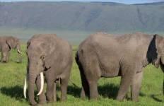 Kenya Tanzania Adventure Tour