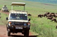 Game Parks and Gorillas Tour