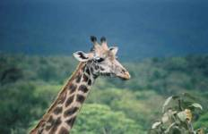 Kenya: Masai Mara 8 Day Riding Safari Tour