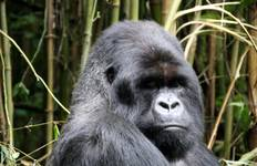The Gorilla Trek Tour