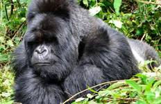 Africa East & South between Nairobi and Nairobi with Gorillas Tour