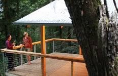 Tarkine Rainforest Walk Tour