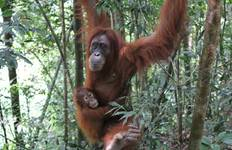 Borneo Wildlife Discoverer Tour