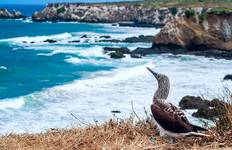 Galapagos, In Darwin\'s Footsteps (from Quito to Guayaquil) Tour