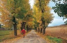 Camino - Pyrenees Tour