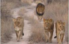 Wildlife Research in South Africa Expedition Tour