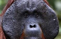 Tanjung Puting Orangutan Fundraising Tour