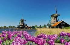 Tulips & Windmills - Amsterdam to Antwerp Tour