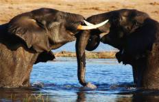 Vic Falls to Kruger Tour