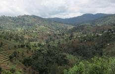 Mazumbai Forest Reserve Tour Tour