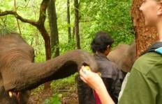 Volunteer with Elephants in Thailand Tour