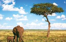 Kenya Wildlife Safari Tour