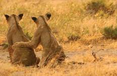 Serengeti Trail Tour